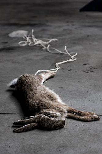 foto konijn