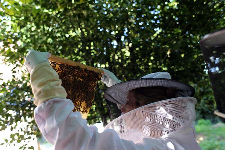 bees-3